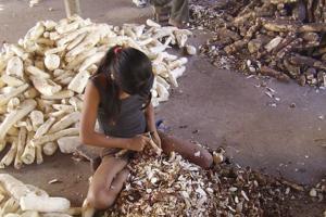 Marques Casara: Em silêncio, 261 crianças morreram trabalhando no Brasil