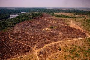 Marques Casara: Os verdadeiros desmatadores da Amazônia não estão na lista do Intercept