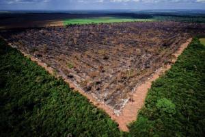 Programa Bem Viver: Amazônia brasileira sofre os impactos da pandemia