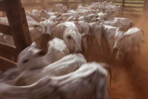 Sabe por que a indústria de carne não é sustentável? Programa Bem Viver explica