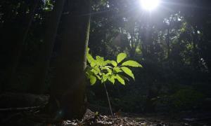 Sabedoria popular para a preservação de florestas é destaque no programa Bem Viver