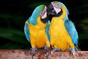 Amazônia: Radinho BdF adentra a maior floresta tropical do mundo