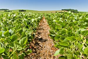 Programa Bem Viver: conheça a produção de soja orgânica do MST em Sidrolândia (MS)