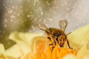 Programa Bem Viver confere transformações pela música, apicultura e bioma Pantanal