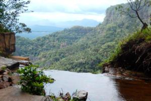 Programa Bem Viver fala sobre preservação da diversidade genética da caatinga