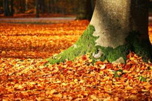 Radinho BdF acompanha a mudança das estações do ano e dedica edição ao outono