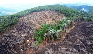 Marques Casara: A salvação da Amazônia passa pela China e pelos EUA (I)