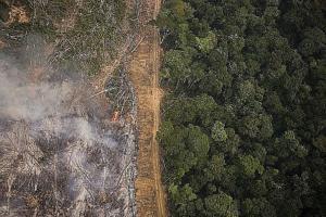 Desmatamento da Amazônia reduz oferta de água para população de São Paulo