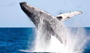 Radinho BdF celebra Década dos Oceanos debatendo a importância de preservar os mares