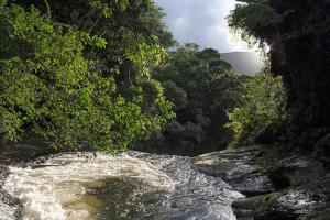 No Dia da Mata Atlântica, Programa Bem Viver debate preservação do bioma