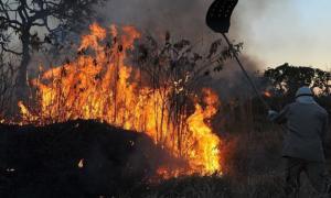 Programa Bem Viver debate como desmatamento da Amazônia aumenta o CO2 na atmosfera