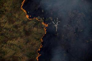 Programa Bem Viver debate riscos de novos incêndios no Pantanal