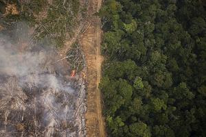 ONG lança plataforma para monitorar desmatamento; conheça no Programa Bem Viver