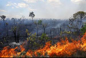 Programa Bem Viver: Desmatamento do Cerrado é julgado no Tribunal Internacional dos Povos