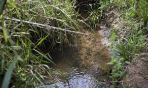Quer ajudar a preservar nascentes do Cerrado? O Programa Bem Viver conta como